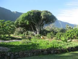 native plant nursery photo gallery u s national park service