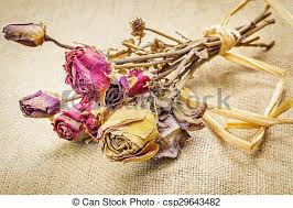 dried roses dried roses on rustic jute fabric pictures search photographs