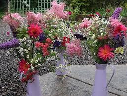 welcome to sligo garden flowers 085 760 1333 sligo garden