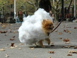 Sheep Dog Costume Halloween 25 Dogs Costumes Ideas Puppies