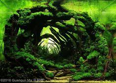 Most Beautiful Aquascapes Aquascaping Driftwood Page Fish Tank Pinterest Driftwood