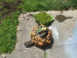 Turtle Planter Succulent Turtle World And Lunar Domination