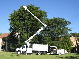 gallery affordable tree service las vegas nv