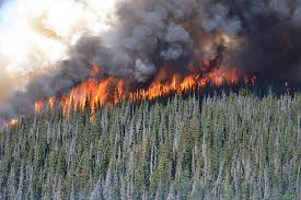 Wildfire Alerts Bc by Pei To Send 12 Forest Firefighters To Bc