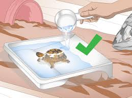 Tortoise Home Decor by How To Create An Indoor Box Turtle Habitat With Pictures