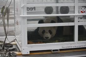 the fedex panda express china to scotland