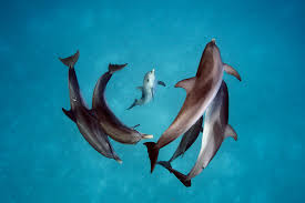 a photographer shows us just how smart dolphins are u2013 proof