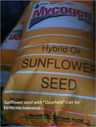 heartland outdoors food plotting sunflowers for dove food plots