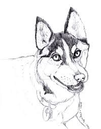 wip realistic siberian husky drawing by free spirited wolf on