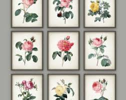 antique botanical print set of 12 vintage botanical home