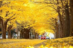 15 of the world s most beautiful tree tunnels and how to get