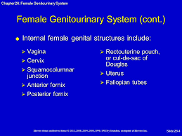 Cul De Sac Anatomy Female Female Genitourinary System Ppt Download