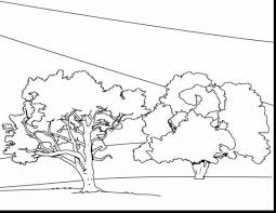 terrific christmas tree outline drawing with tree coloring page