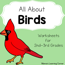all about birds worksheets mamas learning corner