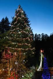 living christmas trees christmas lights decoration