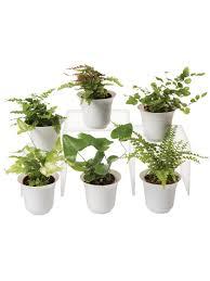 terrarium containers gardener u0027s supply
