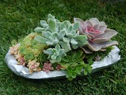diy a low maintenance succulent garden world of succulents