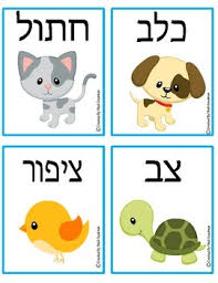 animal hebrew flash cards hebrew flash cards animals tpt