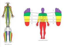 reflexology massage t h r i v e therapies