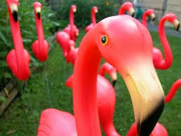68 best pink flamingos images on america america