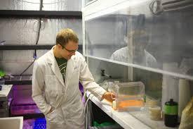 easing testing bottlenecks marijuana venture
