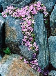 giardini rocciosi in ombra come creare un giardino roccioso foto 12 40 design mag