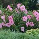 jardinierparesseux.files.wordpress.com/2020/08/200...