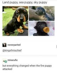 Meme Land - land puppy sea puppy sky puppy meme xyz