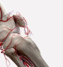 3d Medical Software 3d4medical U2013 Award Winning 3d Anatomy And Medical Apps