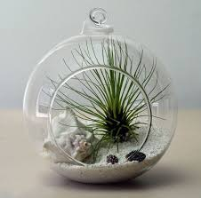 10 cm glass hanging planter air plant terrarium globe container f