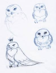 snowy owl sketches harfang by lejellycat on deviantart