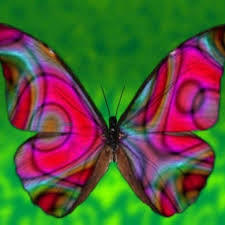 what do butterflies eat creating a butterfly garden all about