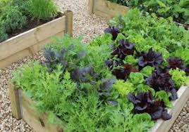 pictures to start vegetable gardening in planters location u2013 home