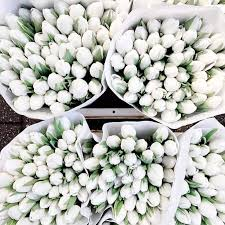 White Flowers Pictures - best 20 white tulips ideas on pinterest petals florist white