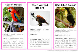 45 animals of south america nomenclature and information cards