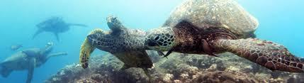 ending sea turtle farming world animal protection usa