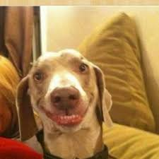 Meme Smile - big smile doggie blank template imgflip