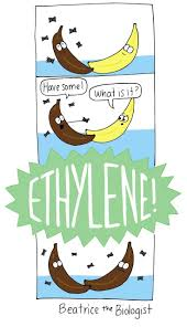 9 best images about beatrice the biologist comics on pinterest