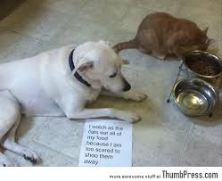Bad Dog Meme - dogs with notes the best of dog shaming 50 funny pictures