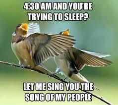 Meme Bird - 11 bird 4 30 am and you re trying to sleep meme pmslweb