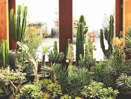 poisonous houseplants 10 indoor plants for pet owners and parents