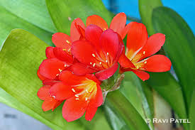 a blooming flower photos by ravi