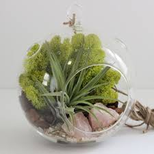 rose quartz crystal air plant terrarium kit pink and chartreuse
