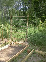 organic and cheap trellis sticks u0026 twine garden pinterest
