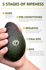 best 25 ripen avocado ideas on pinterest how to ripen avocados