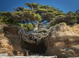 cool trees 17 incredible trees that won the battle against civilization