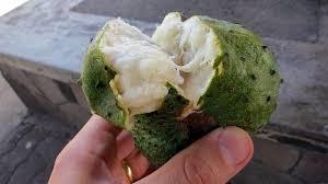 cuisiner avec les aliments contre le cancer pdf le corossol le fruit magique qui aide à lutter contre le cancer