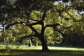 tree hunt cross tree journal for world golf wgv