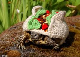 funny tortoise wool cozies knitted costume turtles u0026 tortoises