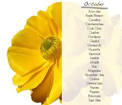 november seasonal flowers what flowers are in season october